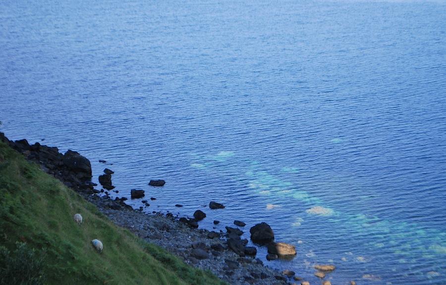 овцы, Шотландия