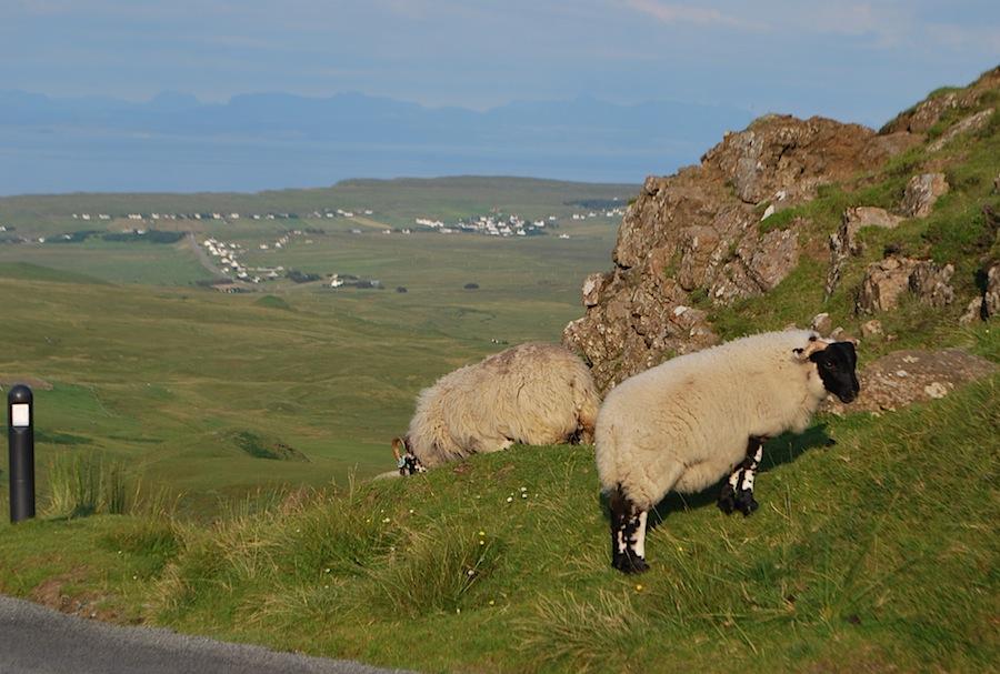 черноголовые овцы, Швейцария