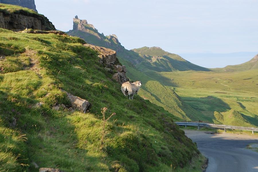 овцы, Шотландия, остров Скай
