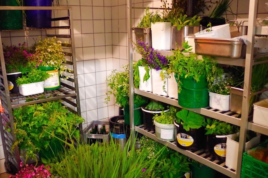 холодильник, в котором хранятся травы