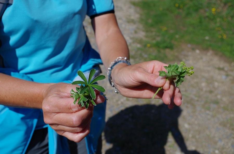 Швейцарские травы