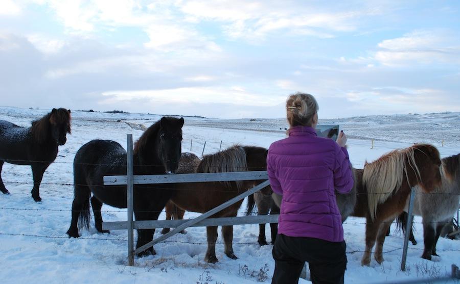 Исландия, лошади