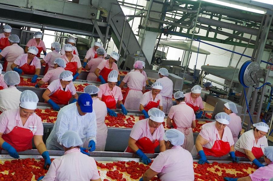 помидоры, томаты, Завод La Doria spa