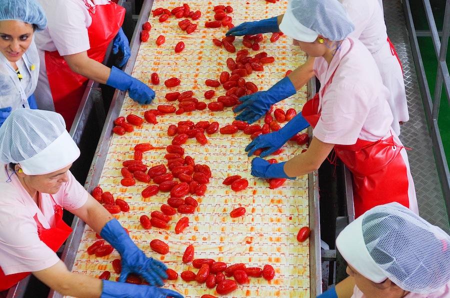 сортировка помидоров на заводе La Doria spa