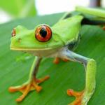 Почему в Коста-Рике здорово?