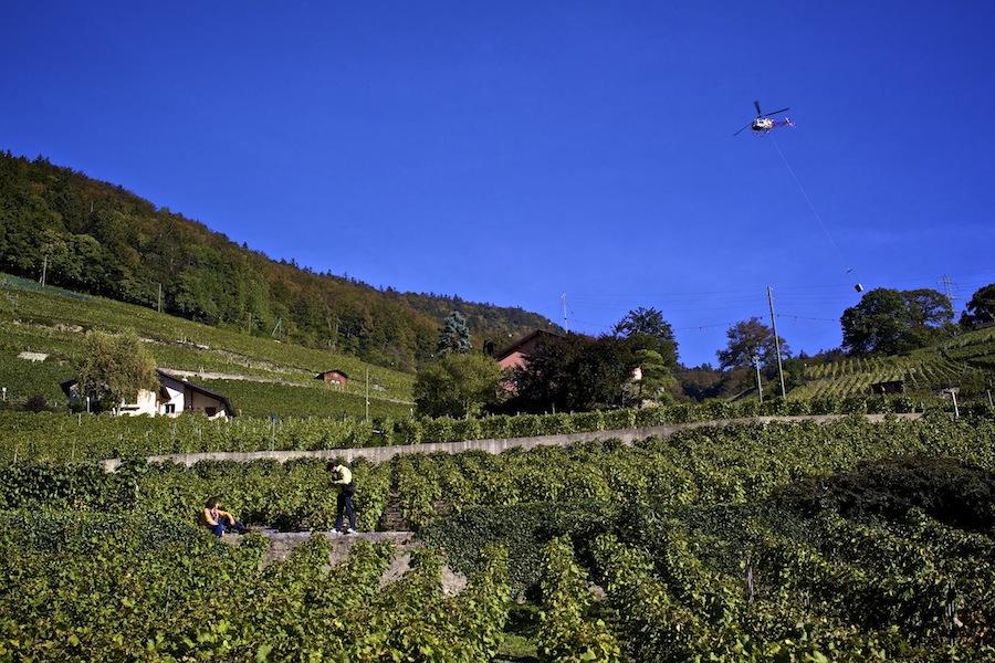 виноградники, вино, Швейцария