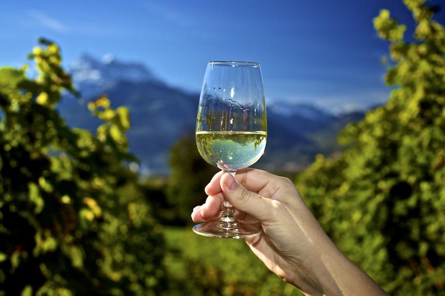 виноградники Оллона, швейцарское вино