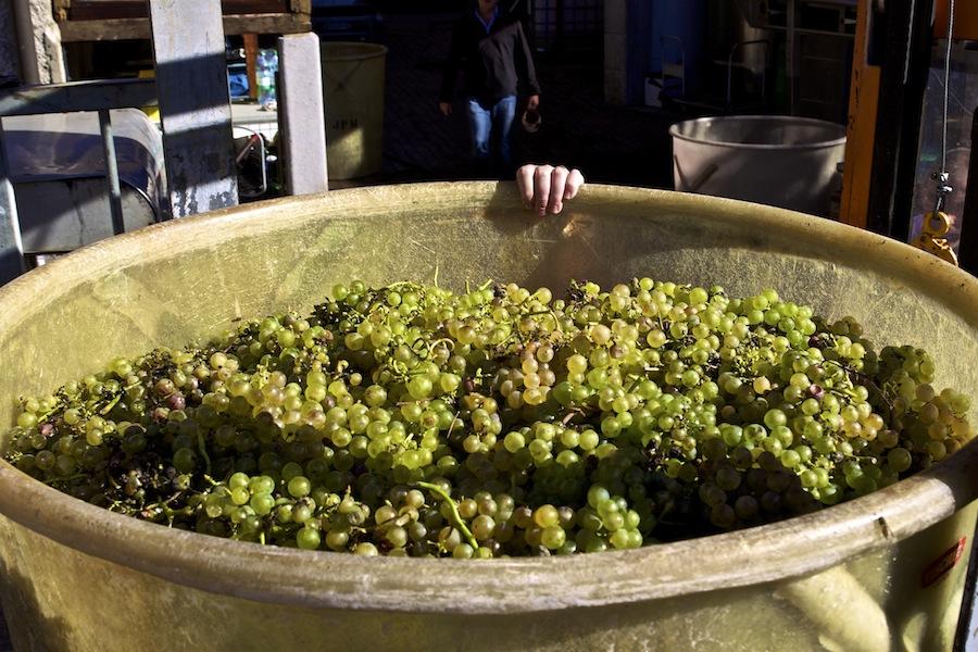 Винодельня Pierre-Alain Meylan, Швейцария, вина