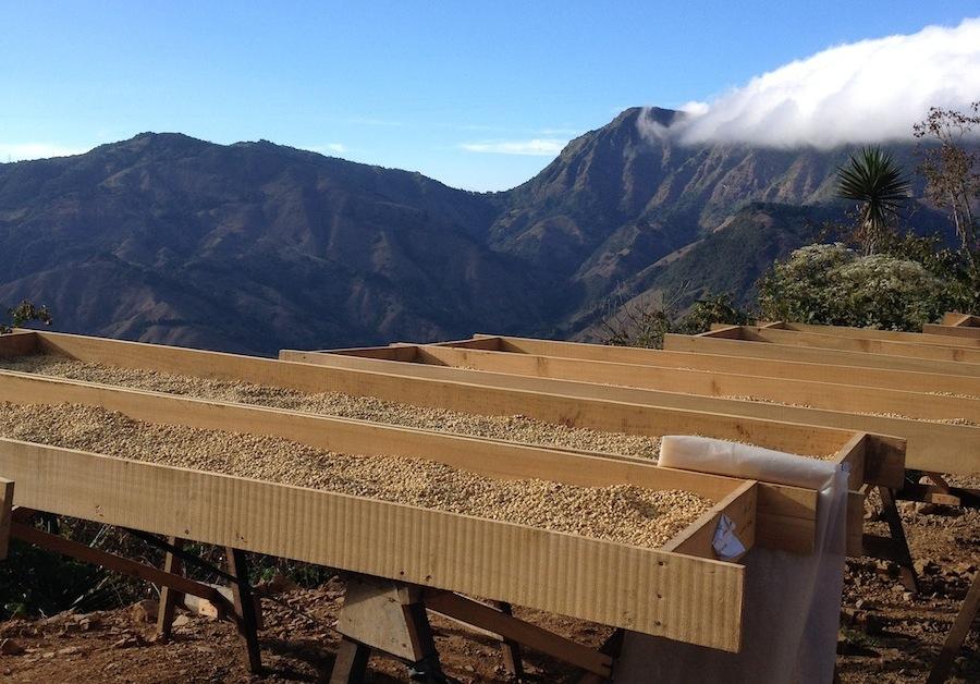Сушка кофейных зерен в горах, Коста-Рика