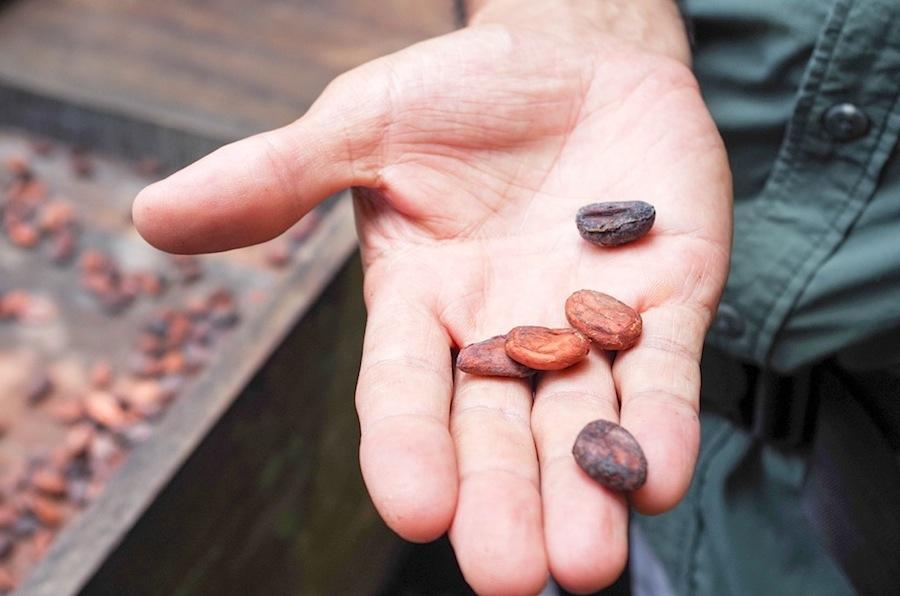 какао-бобы, Коста-Рика