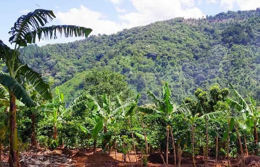 Коста-Рика, Вид на долину из кофейной фермы