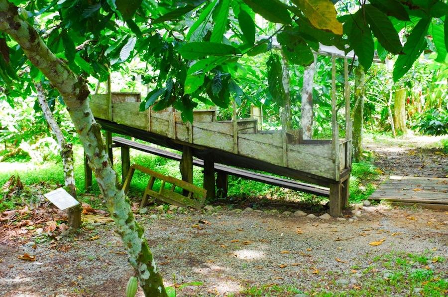 The Chocolate Museum & Factory, сушка бобов на солнце, Коста-Рика