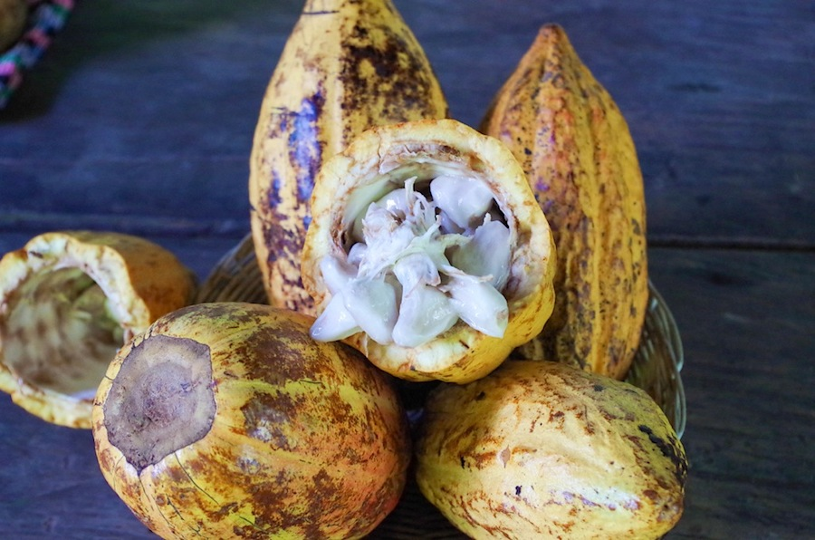 мякоть какао-бобов, Коста-Рика