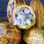 Шоколад в Коста-Рике: trip-point прошел по шоколадным тропам страны