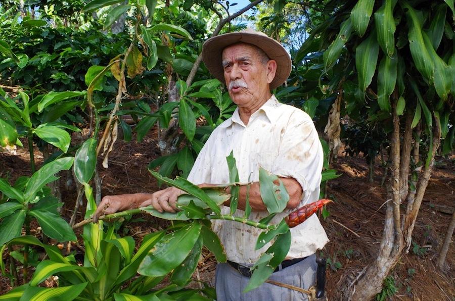 Кофейная плантация дона Мануэля