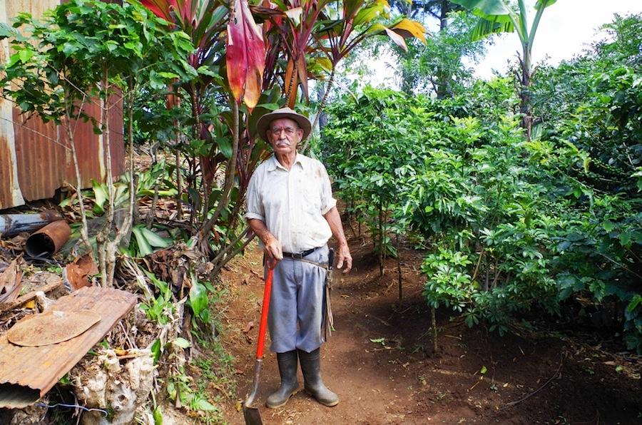 Дон Мауэль, коста-рика, кофейная плантация