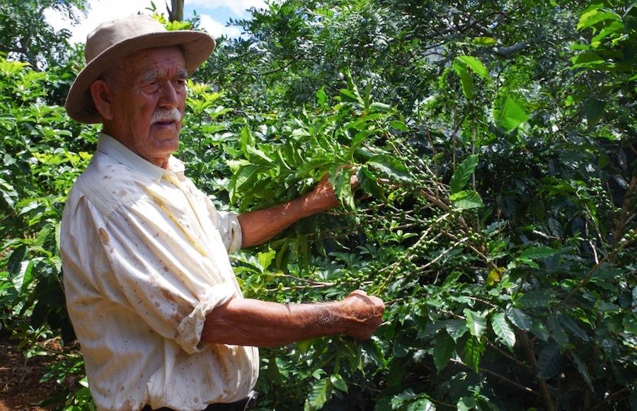 Коста-Рика, Дон Мануэль и кофейное дерево