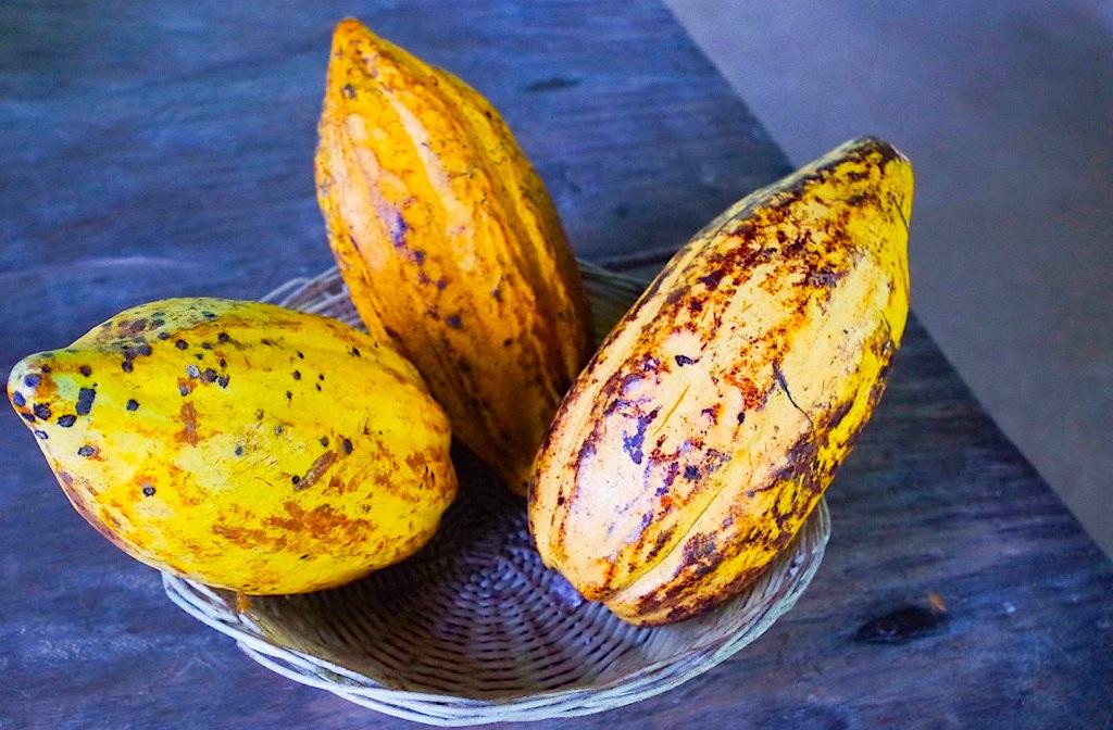 какао бобы, Коста-Рика