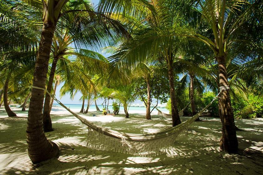 AMILLA FUSHI-VEGETATION, пальмы, Мальдивы