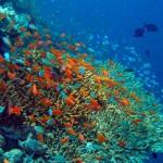 На День Святого Валентина влюбленные сажали кораллы на Мальдивах