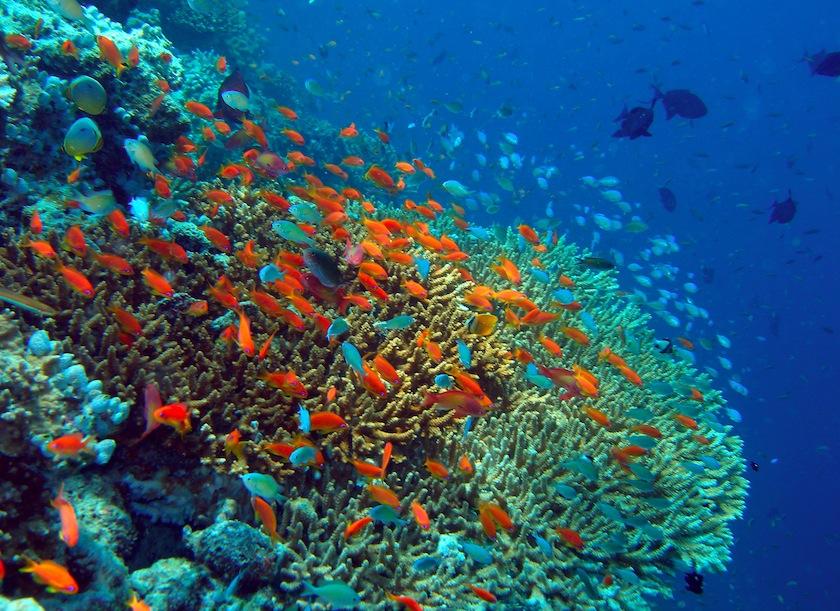 кораллы, Мальдивы