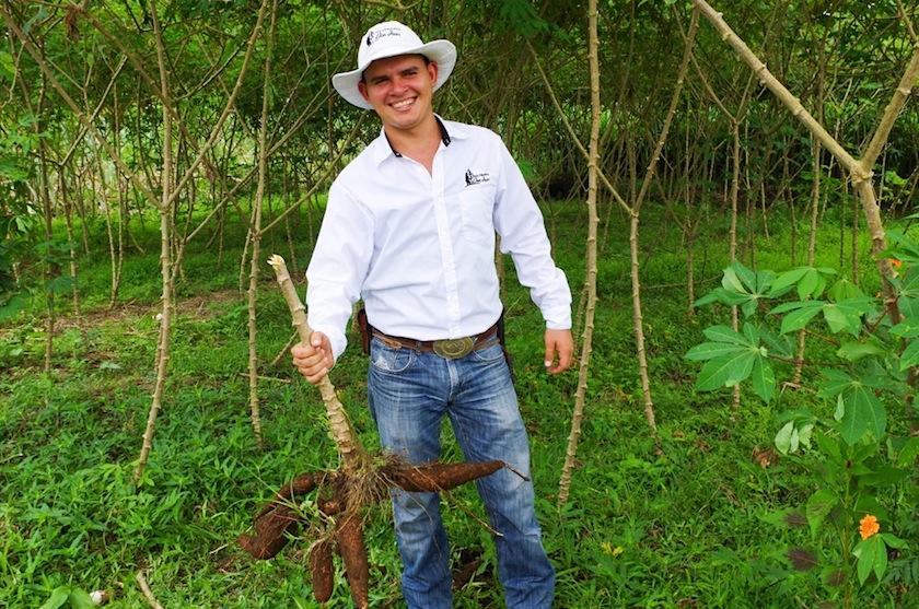 Гид фермы Don Juan с кассавой