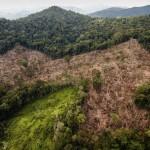 В Гондурасе обнаружены руины таинственного древнего города
