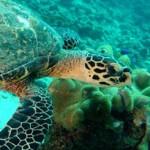 На Сейшелах открылся реабилитационный центр для черепах