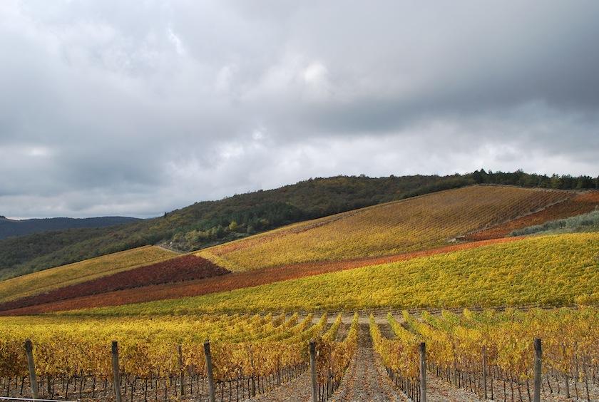 Гайоле-ин-Кьянти (Gaiole in Chianti), винные угодья, вино, виноградники. Тоскана, Италия