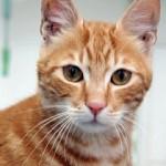 Кот за 17 дней доехал из Египта в Великобританию без еды и воды