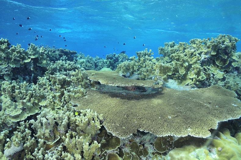 коралловый риф у островов Яп