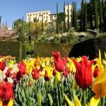 В замках Италии начались фестивали тюльпанов