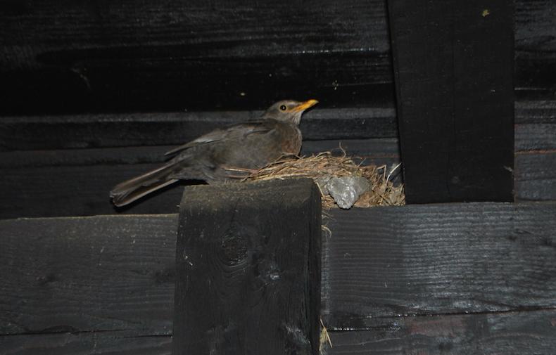 на балконе нашего домика имелось гнездо с птенцами