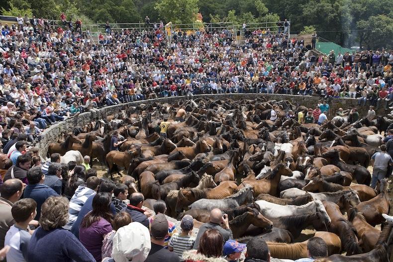 Sabucedo (A Estrada). Fiesta de la Rapa das Bestas - Vista del curro