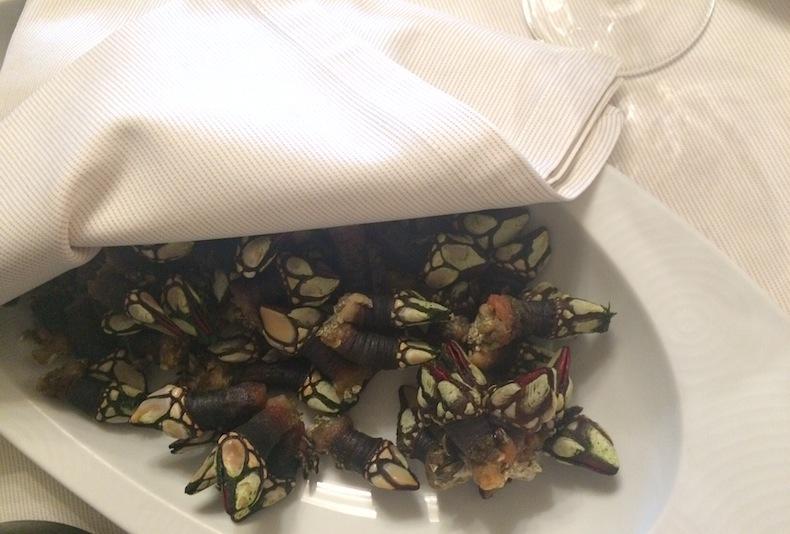 pedunculata (goose barnacles, морские уточки)