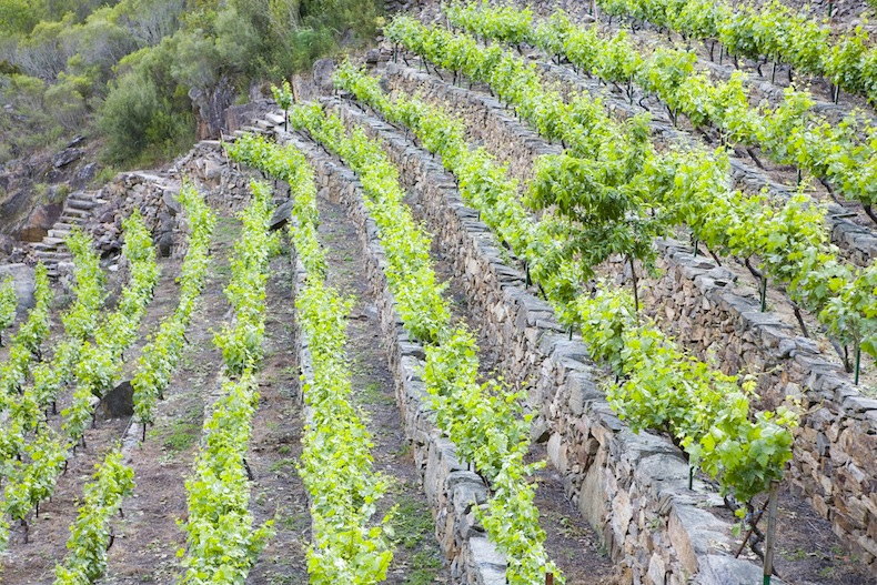 17-Ribeira Sacra-Vineyards, виноградники в Рибера Сакра, Испания, Галисия