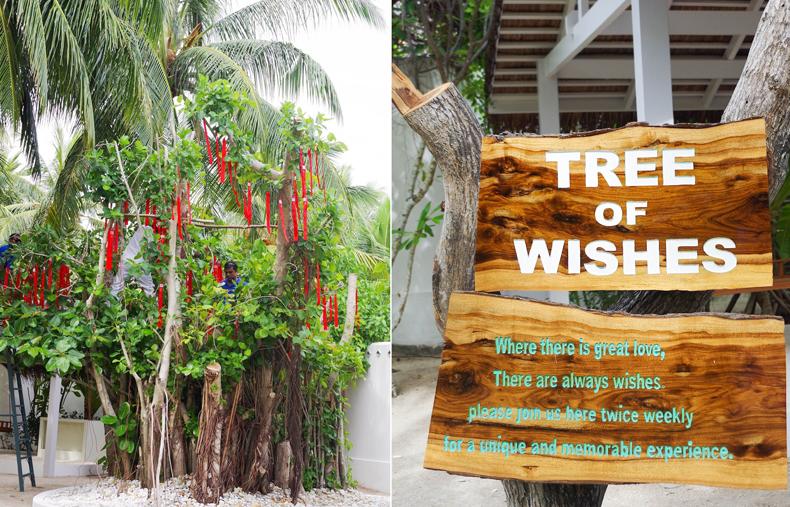 Сад трав, LUX* Maldives, Мальдивы, дерево желаний