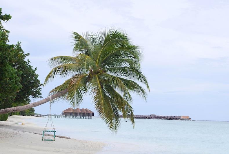 Качели на гнущейся к воде пальме – типичный мальдивский пейзаж