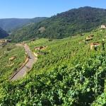 Рибейра Сакра (D.O. Ribeira Sacra): вино из каменных амфитеатров