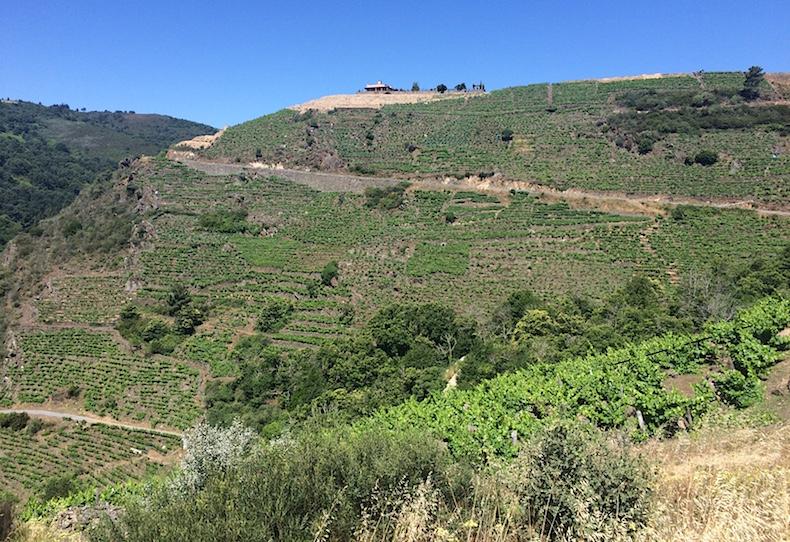 виноградники Рибейра Сакра