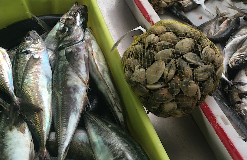 вонголе и рыба на пляже Понтеведра