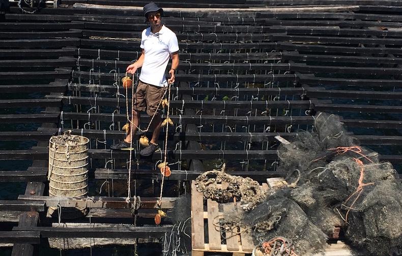 платформы для выращивание морских гребешков, О-Грове, Галисия, Испания