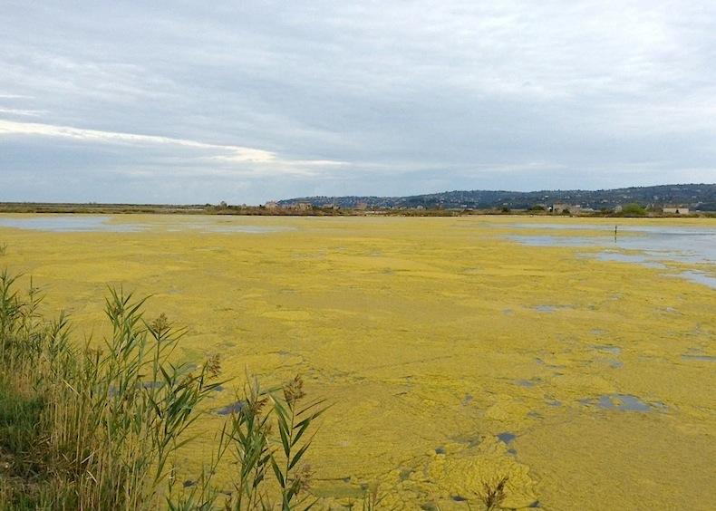 цветущие озера в Сечовлеских солеварнях