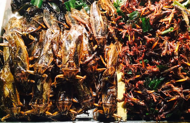 жареная саранча и цикады