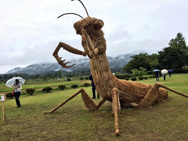 плетеный богомол, Япония