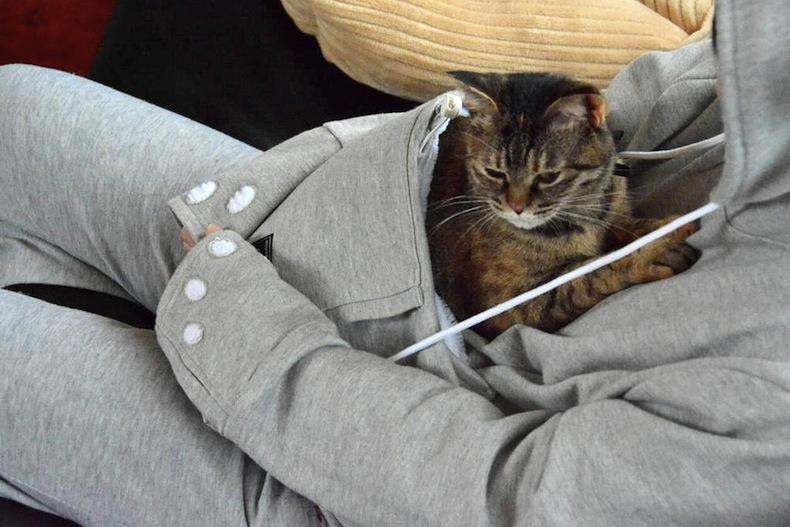 худди для котов