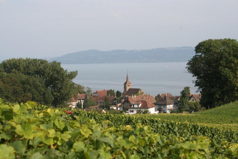 Виноградники в деревне Конкис