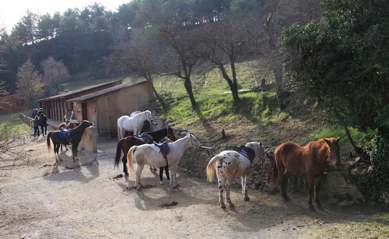 лошади в Пиренеях _фото Бориса Палтусова-2