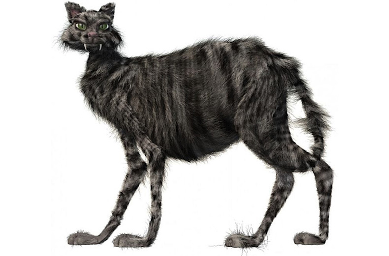 кошка Йолокоттурин