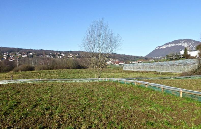 Поле, где выращивают улитки